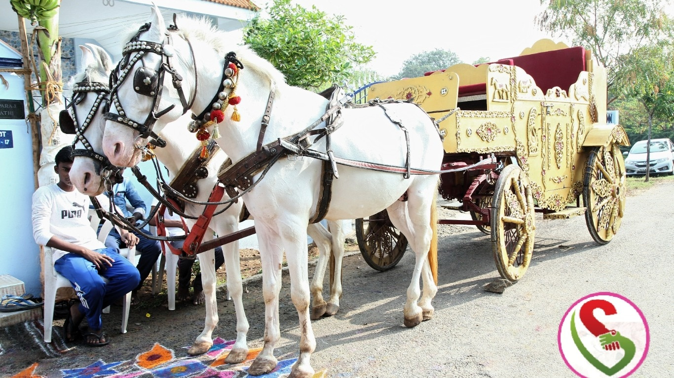 Horse Chariot for wedding, puberty, procession