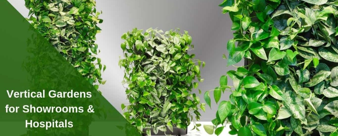 Doorplants Services Pvt Ltd - Plant Nursery in Laggere, Bangalore