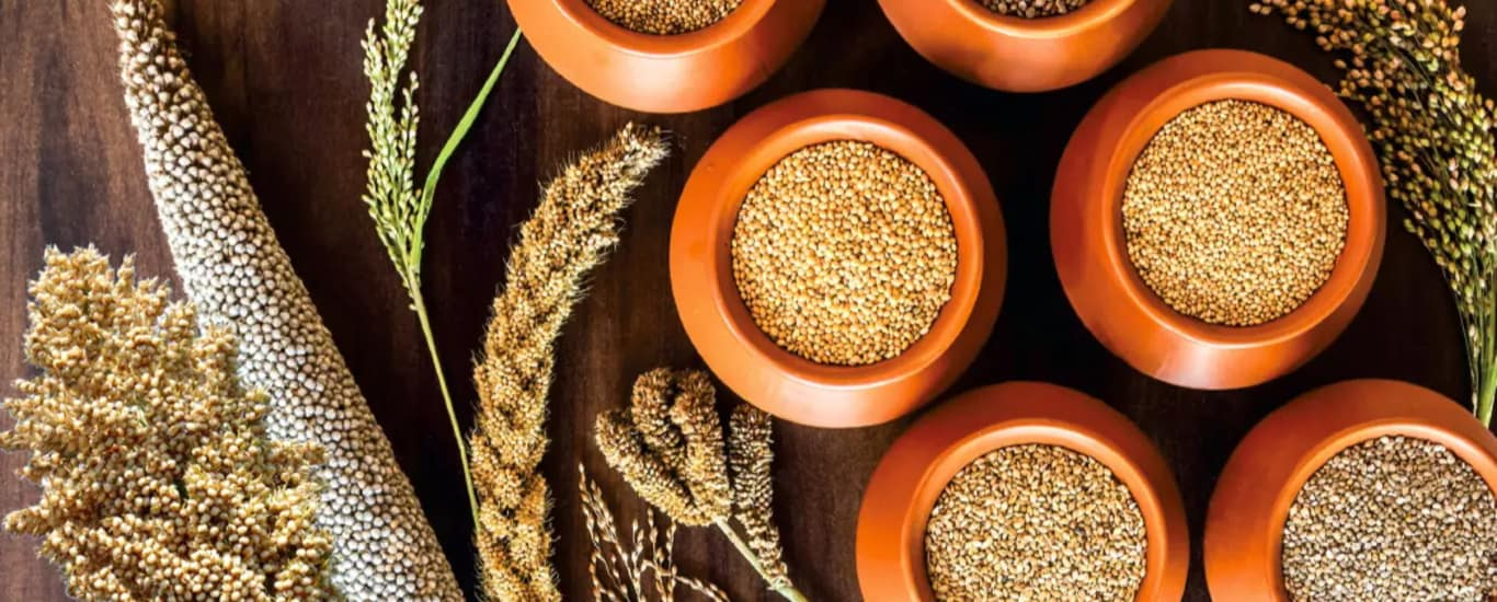 Gobhaarati Agro Industries And Services Pvt Ltd - Grains and Pulses and Cereals Supplier in Vidya Nagar, Hyderabad