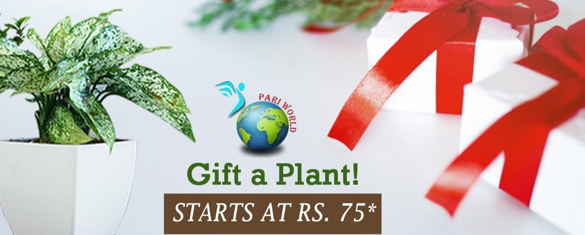 Pariworld Homedecor Pvt. Ltd. - Plant Nursery in Panchsheel Nagar, Ajmer